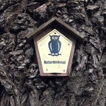 Naturdenkmal_NaturalMonument_Boemitz